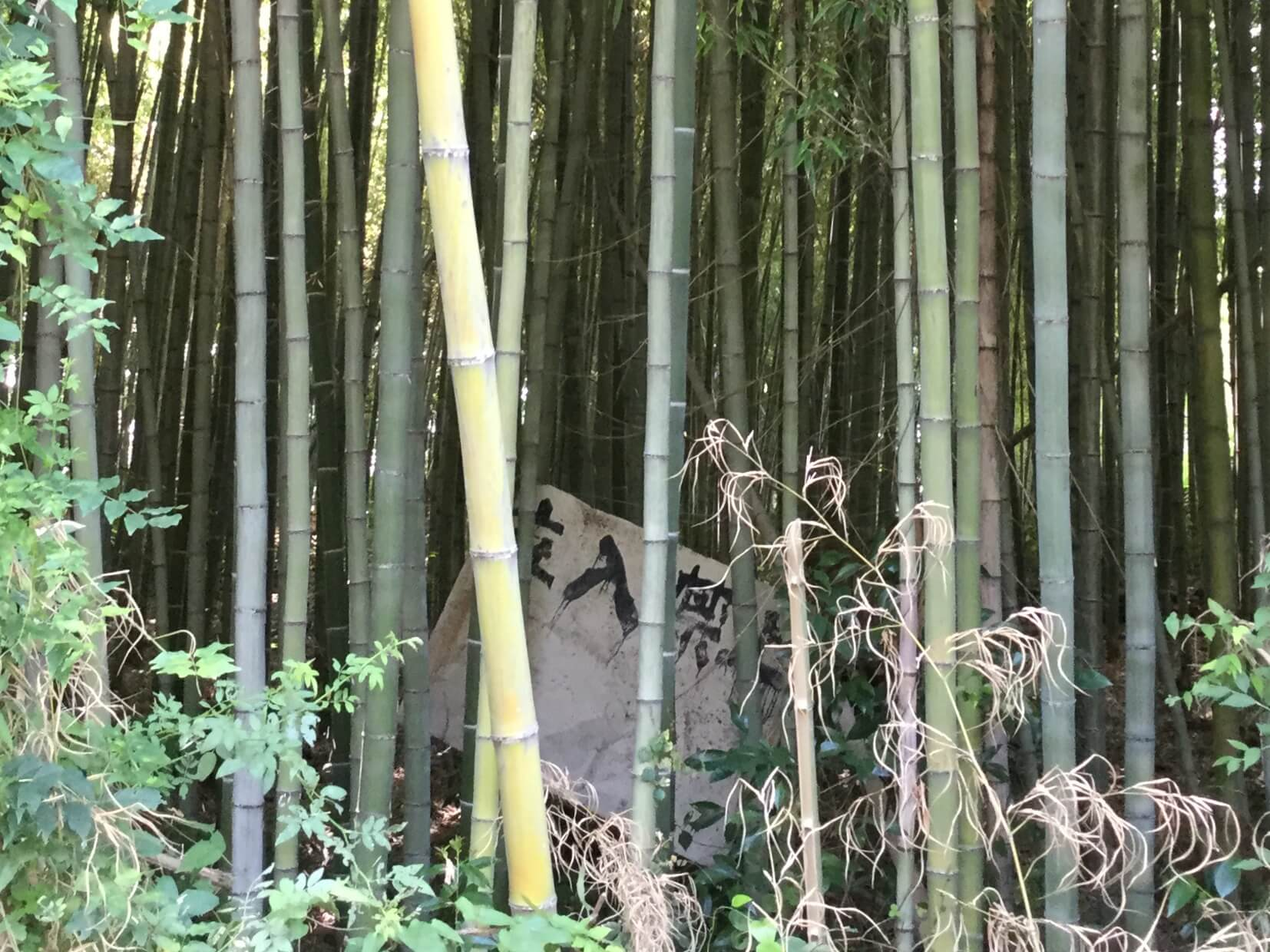 bamboo_keep_out.jpg